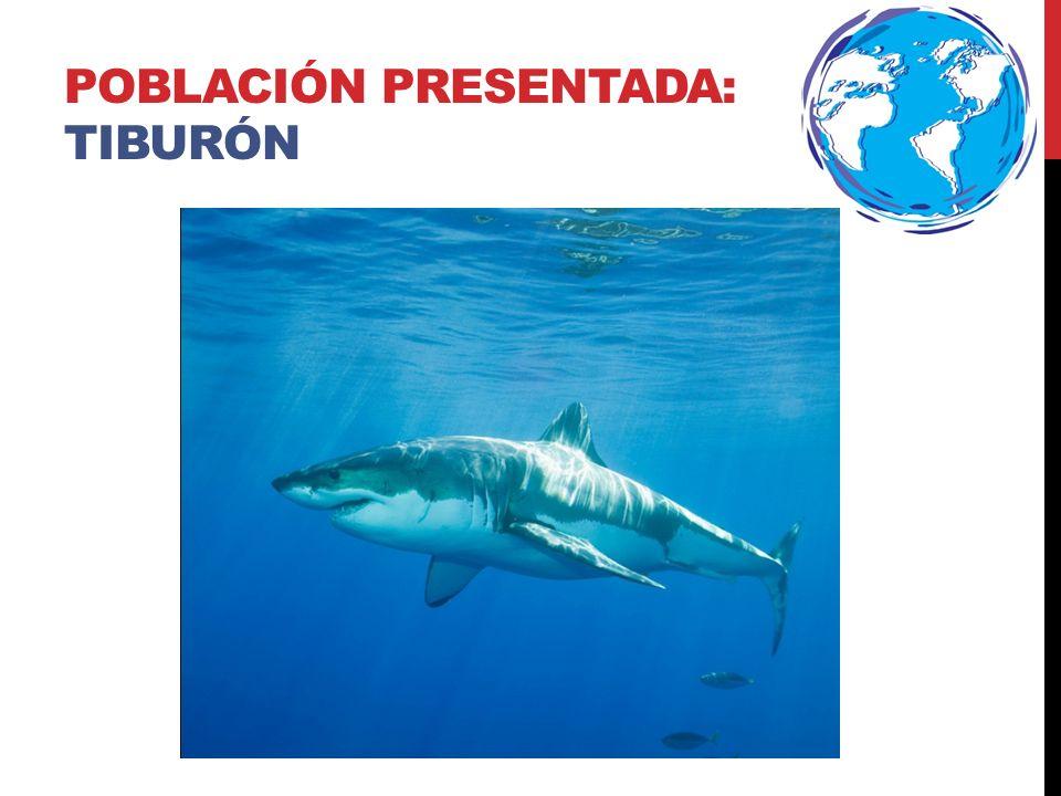 DATOS DEL ANIMAL Adaptaciones – La piel de los tiburones está compuesta de escamas.