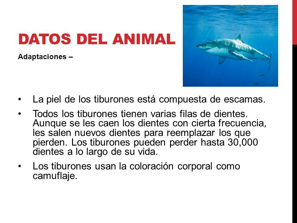 TIBURÓN: NECESIDADES BÁSICAS Necesidades básicas aire agua refugio alimento Refugio/hábitat los tiburones se mueven en el océano constantemente y buscan refugio cuando lo necesitan Alimento peces crustáceos mamíferos marinos moluscos