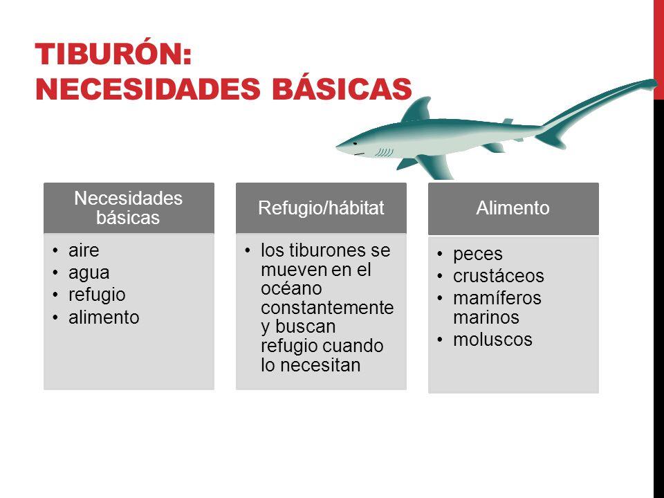 TIBURÓN: NECESIDADES BÁSICAS Necesidades básicas aire agua refugio alimento Refugio/hábitat los tiburones se mueven en el océano constantemente y busc
