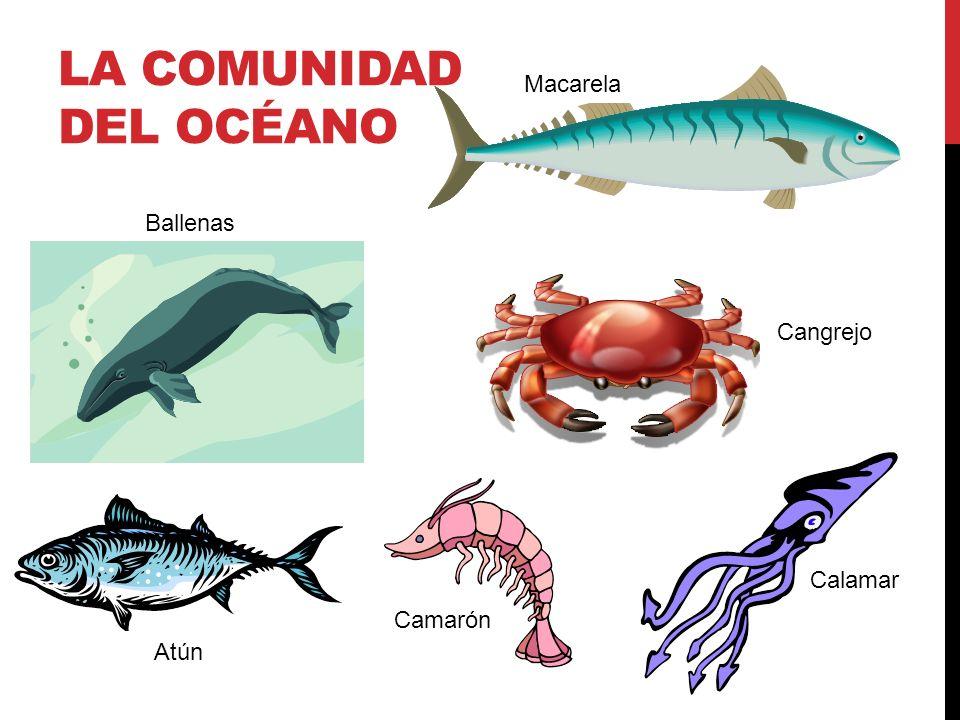 LA COMUNIDAD DEL OCÉANO Ballenas mackerel Atún shrimp squid Cangrejo Camarón Calamar Macarela