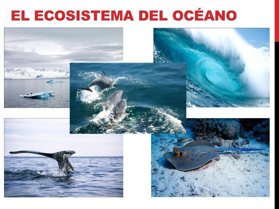 La mayoría de los organismos del océano viven en la zona que está iluminada por el sol.