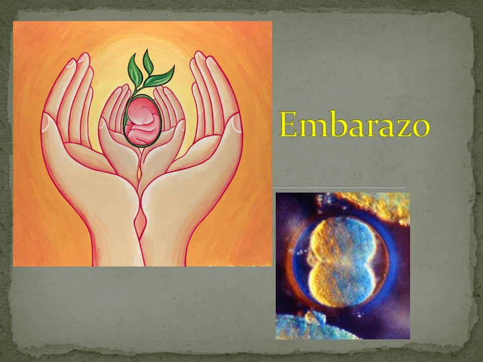 Fecundación Embriología en el Qurán: Hemos creado al ser humano de una gota mezclada Entonces hemos transformado la gota en una estructura como una sanguijuela.