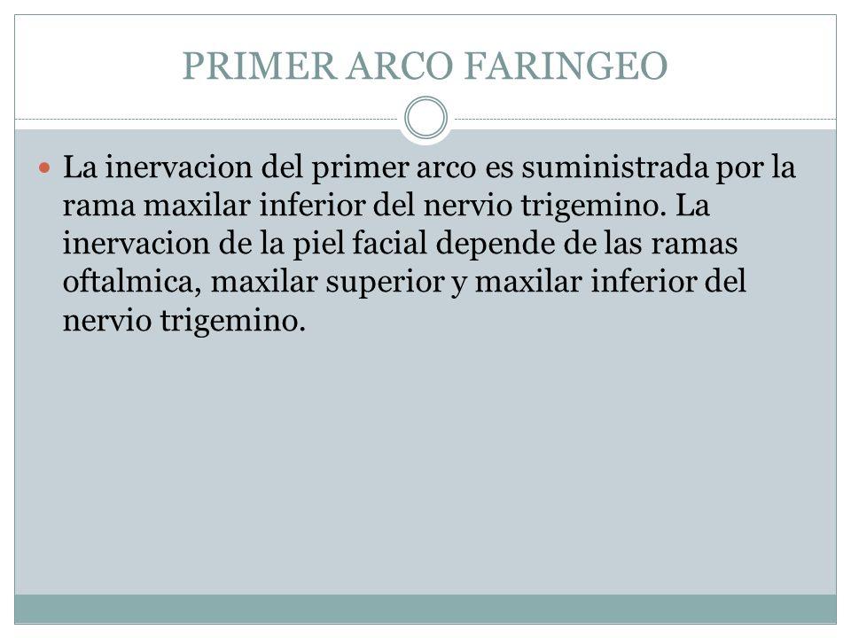PRIMER ARCO FARINGEO La inervacion del primer arco es suministrada por la rama maxilar inferior del nervio trigemino. La inervacion de la piel facial