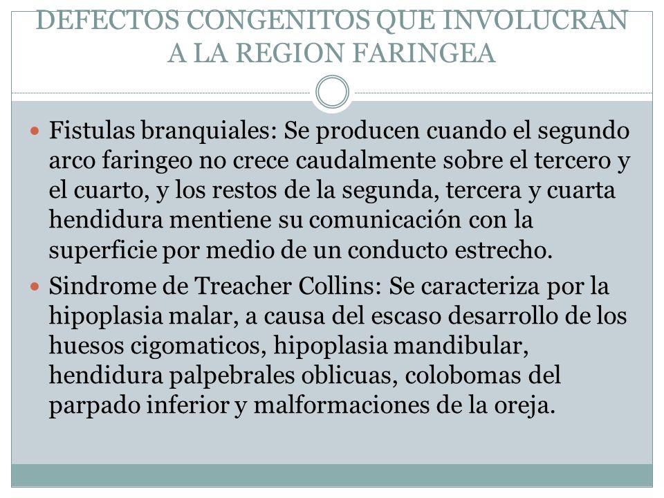 DEFECTOS CONGENITOS QUE INVOLUCRAN A LA REGION FARINGEA Fistulas branquiales: Se producen cuando el segundo arco faringeo no crece caudalmente sobre e