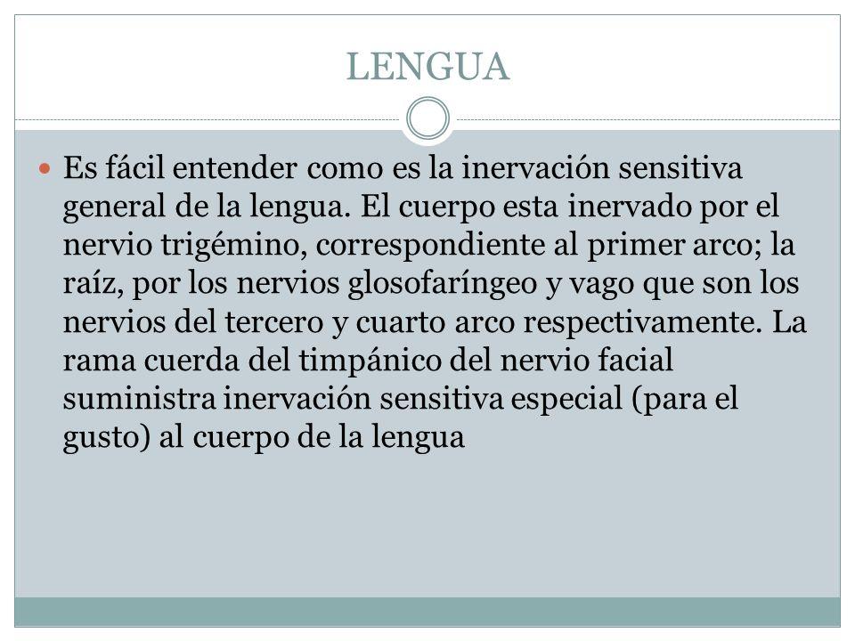 LENGUA Es fácil entender como es la inervación sensitiva general de la lengua. El cuerpo esta inervado por el nervio trigémino, correspondiente al pri