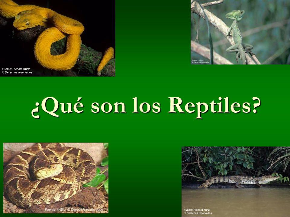 ¿Qué son los Reptiles?