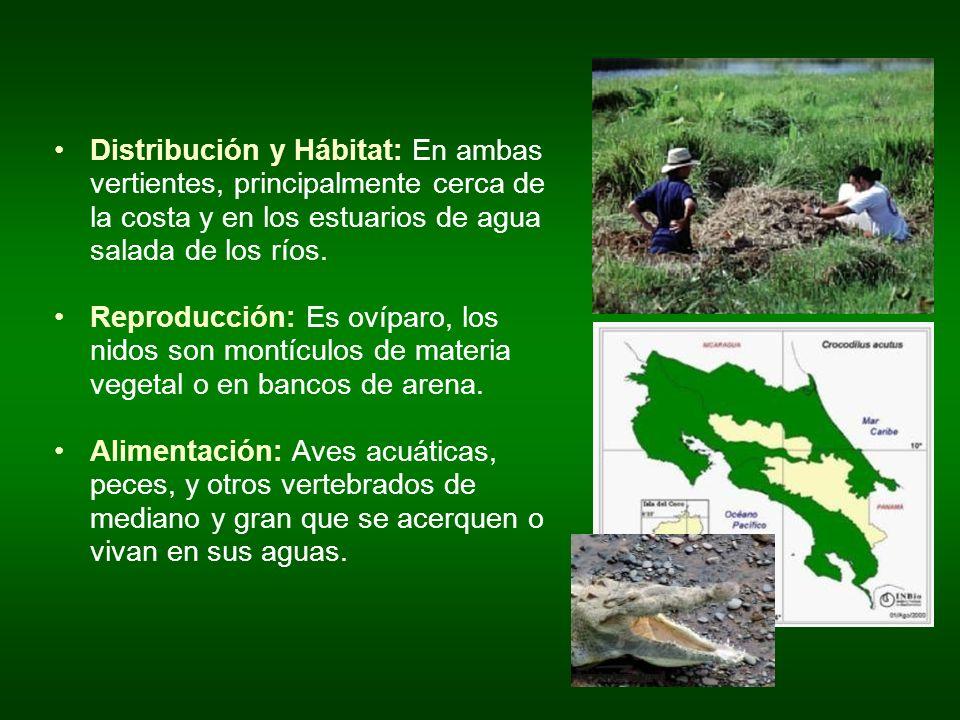 Distribución y Hábitat: En ambas vertientes, principalmente cerca de la costa y en los estuarios de agua salada de los ríos. Reproducción: Es ovíparo,
