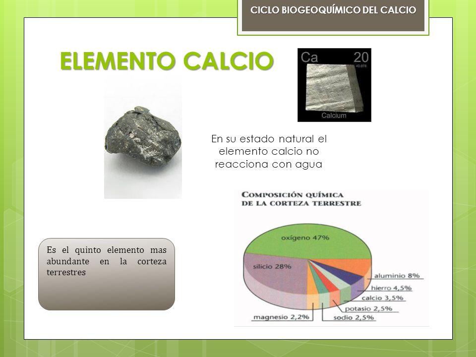 CICLO BIOGEOQUÍMICO DEL CALCIO Es la circulación del calcio entre los organismos vivos y el medio CICLO BIOGEOQUÍMICO DEL CALCIO ciclo sedimentario El ciclo del calcio es un ciclo sedimentario litosfera El calcio es un mineral que se encuentra en,mayor proporción en la litosfera Es la capa más externa de un planeta sólido, formado por rocas y el suelo