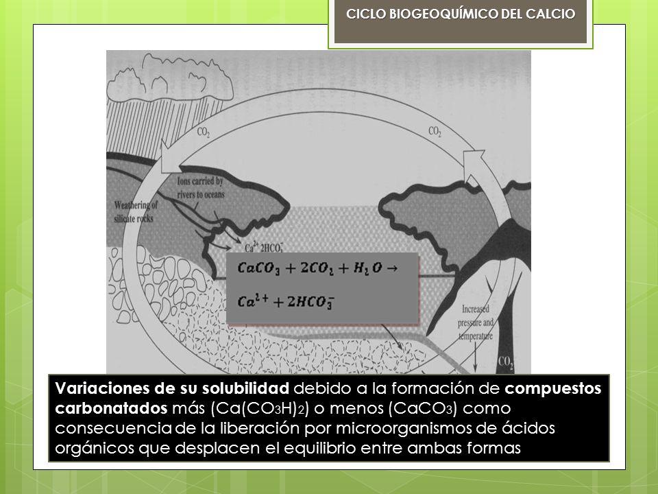 Calcio en la naturaleza: El calcio no se encuentra en elemento puro en la naturaleza CICLO BIOGEOQUÍMICO DEL CALCIO Caliza: CaCO3 Dolomita: CaCO3.MgCO3 Yeso: CaSO4*2H2O Fluorita: CaF2 Rocas Calizas (carbonato de calcio ) Su tenacidad es frágil