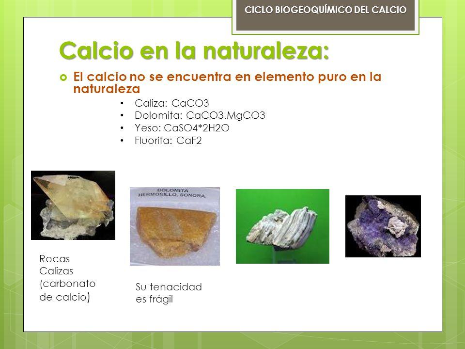 Funciones del calcio: El calcio en las plantas CICLO BIOGEOQUÍMICO DEL CALCIO Estimula el desarrollo de las raíces y de las hojas.