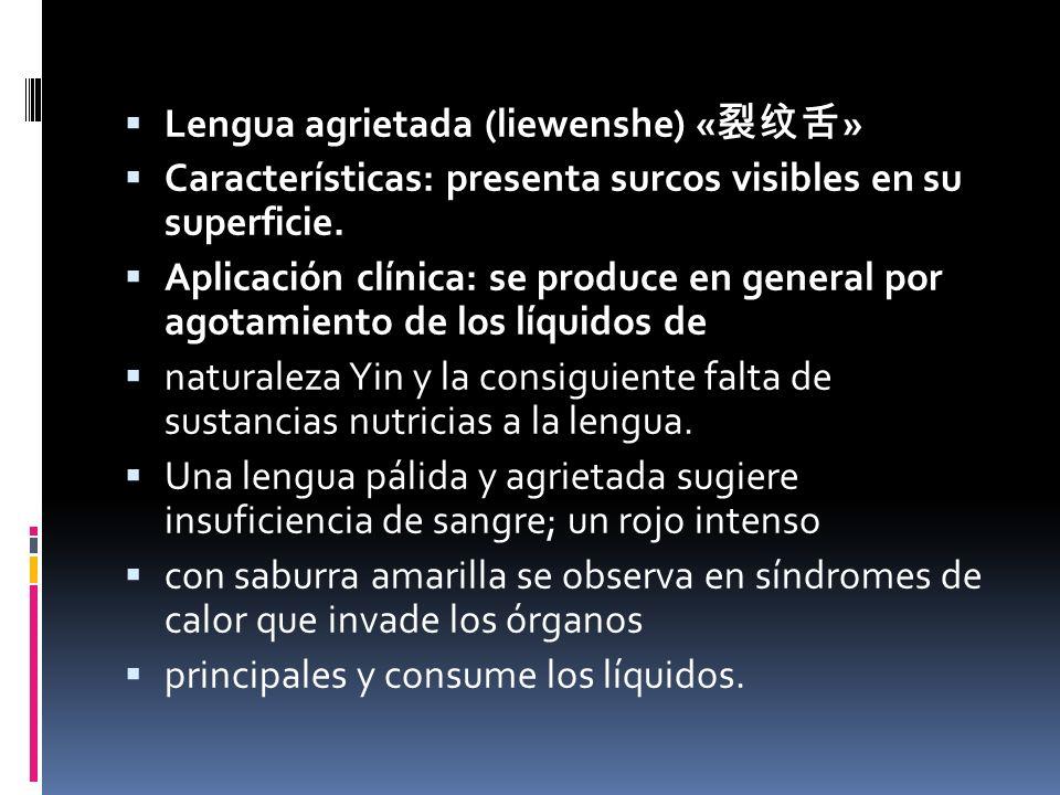 Lengua agrietada (liewenshe) « » Características: presenta surcos visibles en su superficie.