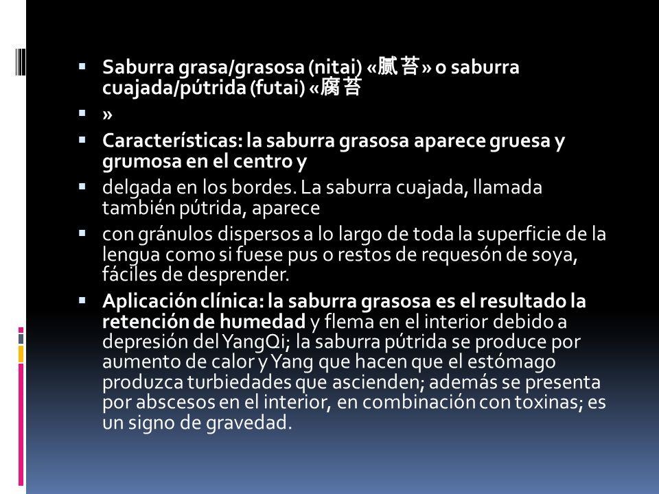 Saburra grasa/grasosa (nitai) « » o saburra cuajada/pútrida (futai) « » Características: la saburra grasosa aparece gruesa y grumosa en el centro y delgada en los bordes.