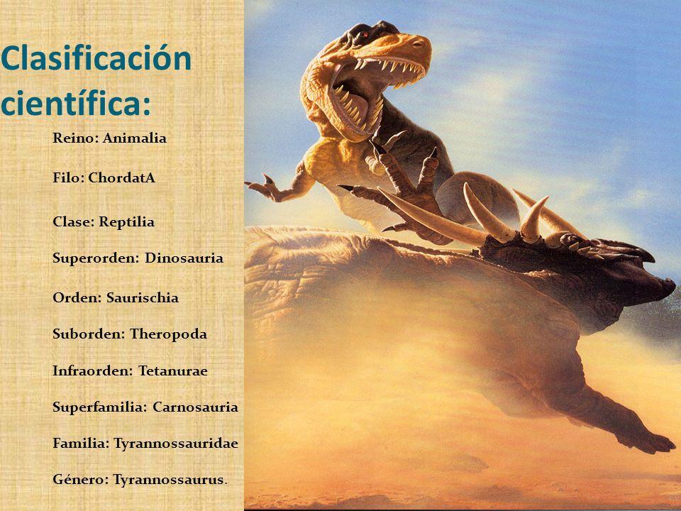 Clasificación científica: Reino: Animalia Filo: ChordatA Clase: Reptilia Superorden: Dinosauria Orden: Saurischia Suborden: Theropoda Infraorden: Teta