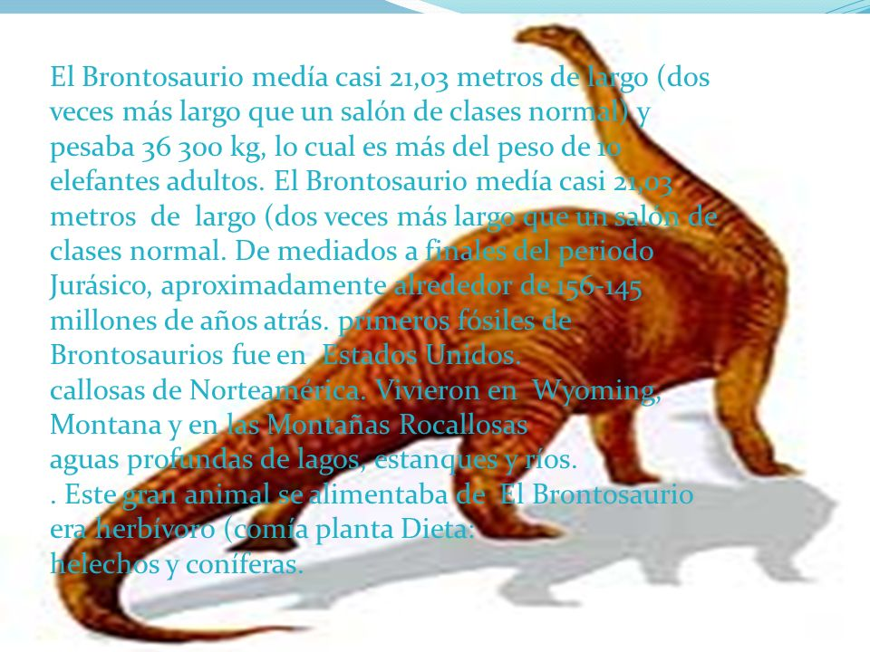 El Brontosaurio medía casi 21,03 metros de largo (dos veces más largo que un salón de clases normal) y pesaba 36 300 kg, lo cual es más del peso de 10