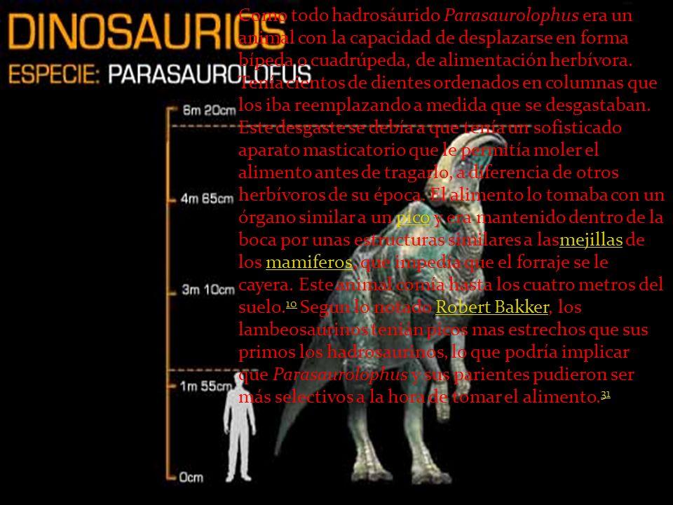 Como todo hadrosáurido Parasaurolophus era un animal con la capacidad de desplazarse en forma bípeda o cuadrúpeda, de alimentación herbívora. Tenía ci