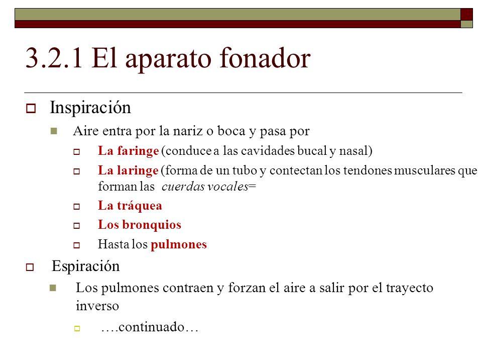 3.5.2 Punto de articulación Alveolares: Apicoalveolares: cuando el ápice de la lengua hace contacto con los alvéolos [ ś ] [l] [n] [ ɾ ] [r] Dorsoalveolares: cuando el dorso de la lengua hace contacto con los alveolos [s] [z] [z] = antes de una consonante sonora = [iz-la] Actividad 3.10 p.