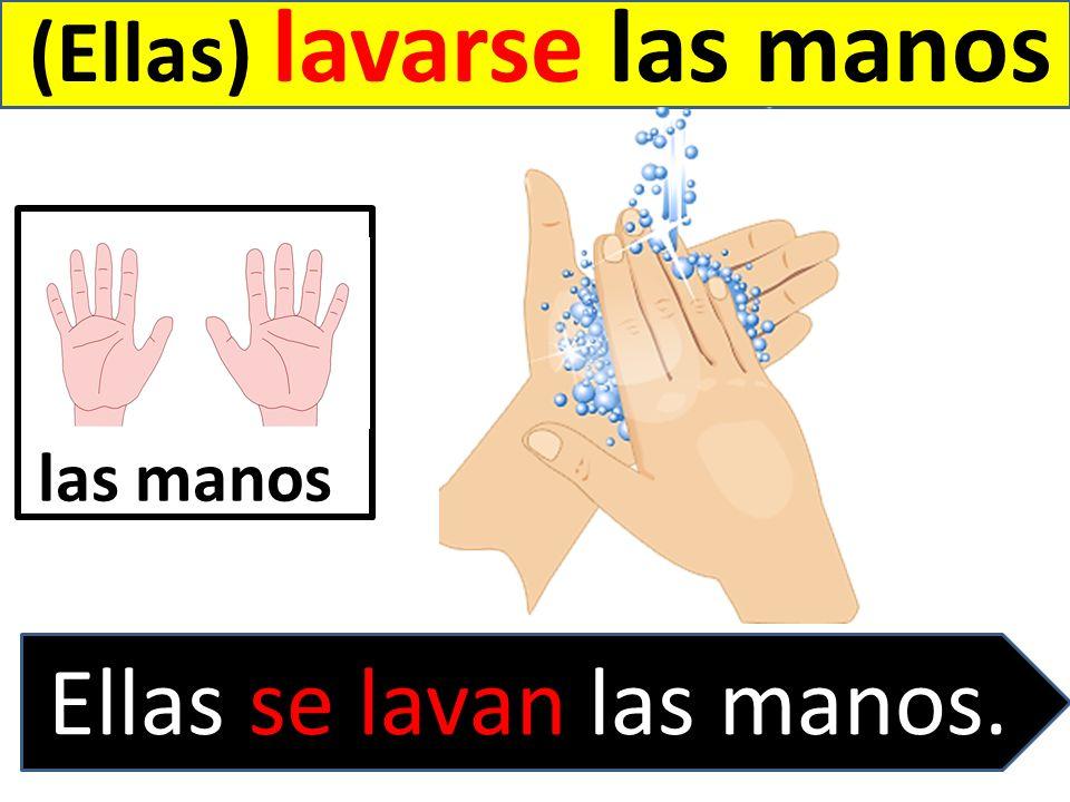 (Ellas) lavarse las manos Ellas se lavan las manos. las manos