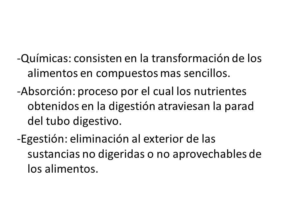 -Químicas: consisten en la transformación de los alimentos en compuestos mas sencillos.
