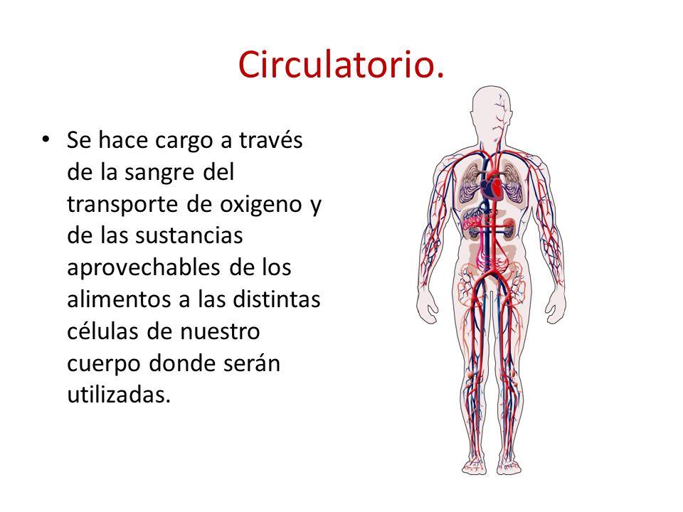 Circulatorio.