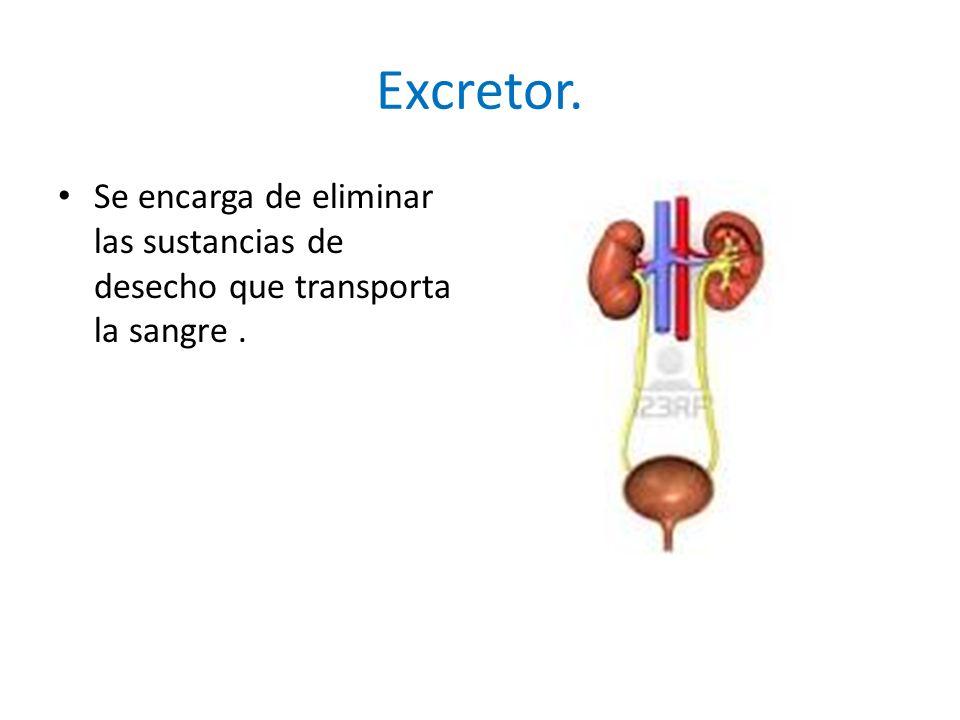 Excretor. Se encarga de eliminar las sustancias de desecho que transporta la sangre.