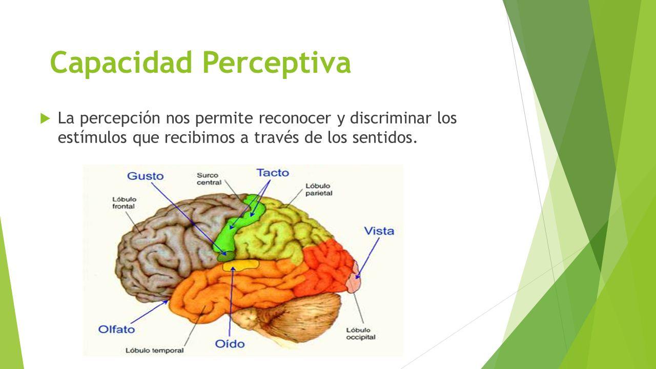 La percepción nos permite reconocer y discriminar los estímulos que recibimos a través de los sentidos. Capacidad Perceptiva