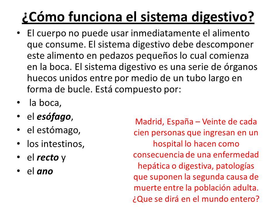 ¿Cómo funciona el sistema digestivo? El cuerpo no puede usar inmediatamente el alimento que consume. El sistema digestivo debe descomponer este alimen