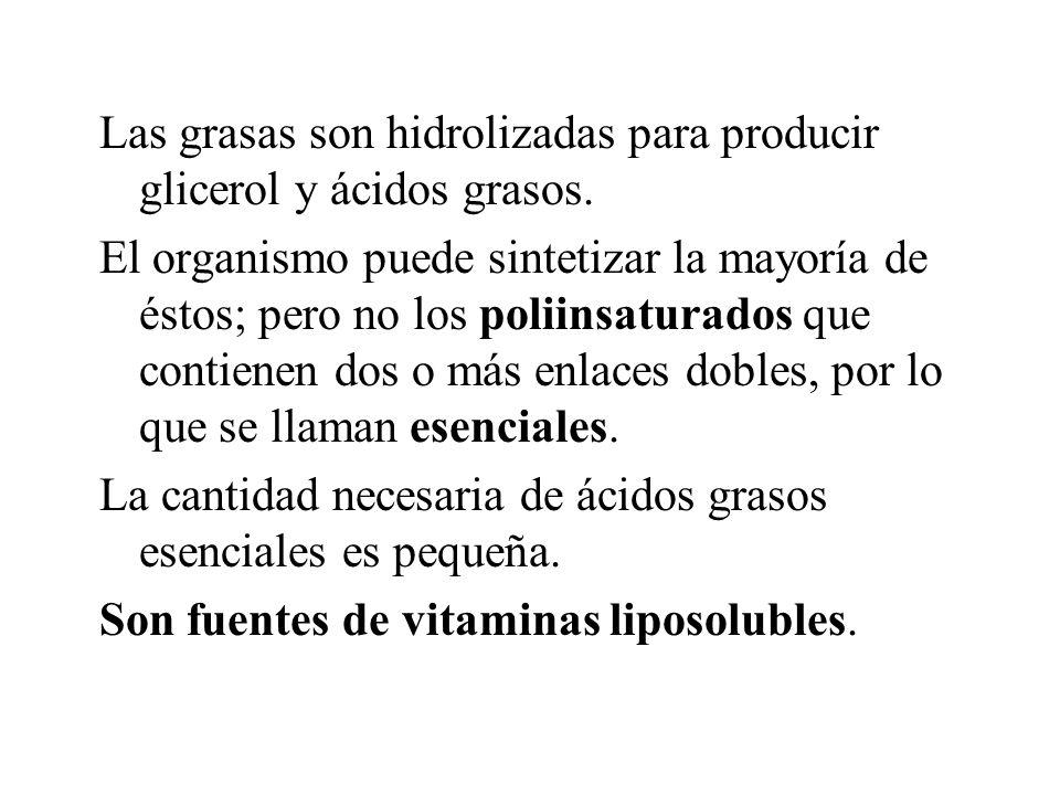 Las grasas son hidrolizadas para producir glicerol y ácidos grasos. El organismo puede sintetizar la mayoría de éstos; pero no los poliinsaturados que