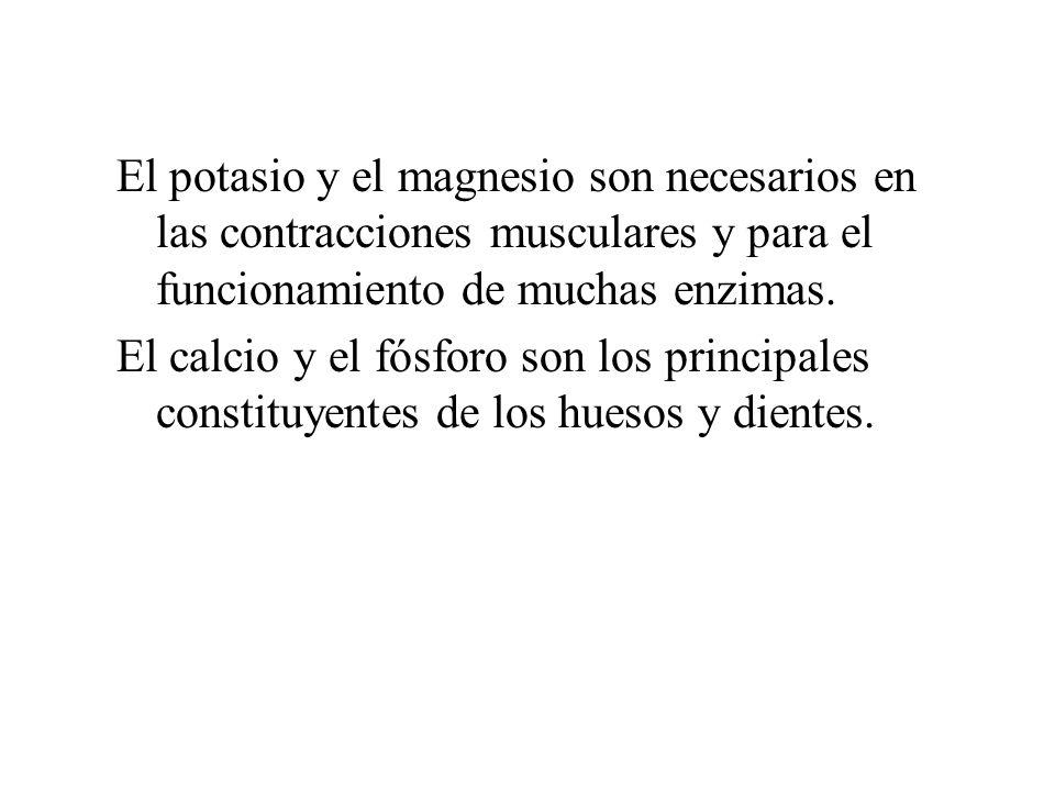 El potasio y el magnesio son necesarios en las contracciones musculares y para el funcionamiento de muchas enzimas. El calcio y el fósforo son los pri