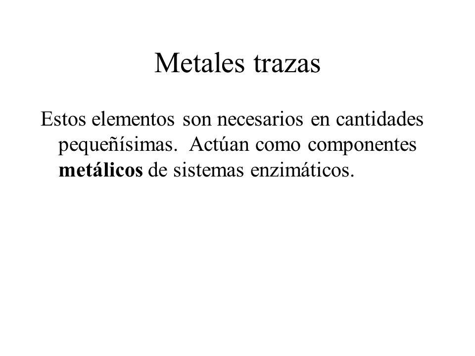 Metales trazas Estos elementos son necesarios en cantidades pequeñísimas. Actúan como componentes metálicos de sistemas enzimáticos.
