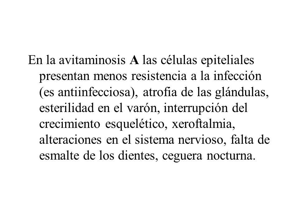 En la avitaminosis A las células epiteliales presentan menos resistencia a la infección (es antiinfecciosa), atrofia de las glándulas, esterilidad en