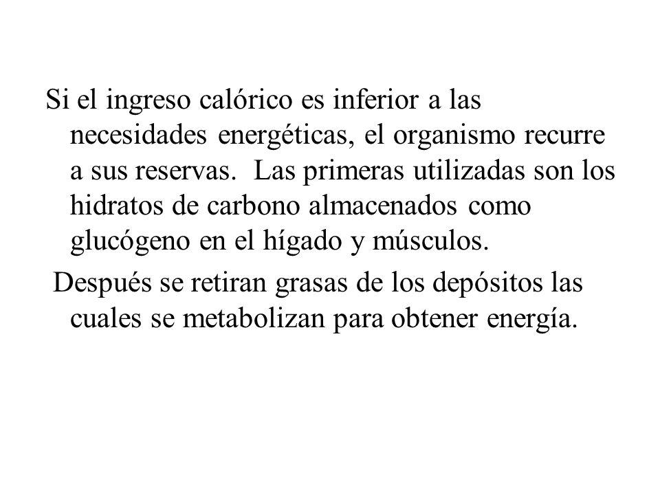 Si el ingreso calórico es inferior a las necesidades energéticas, el organismo recurre a sus reservas. Las primeras utilizadas son los hidratos de car