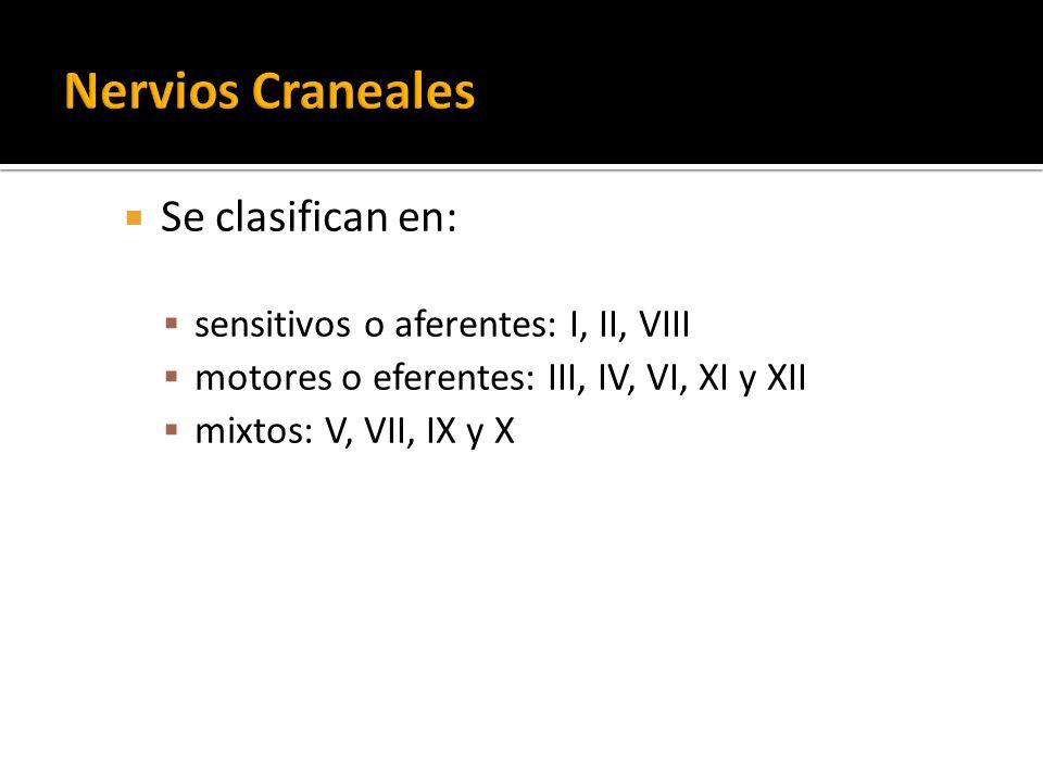 Se clasifican en: sensitivos o aferentes: I, II, VIII motores o eferentes: III, IV, VI, XI y XII mixtos: V, VII, IX y X