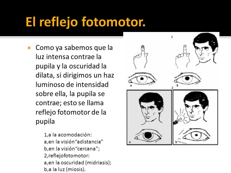 Como ya sabemos que la luz intensa contrae la pupila y la oscuridad la dilata, si dirigimos un haz luminoso de intensidad sobre ella, la pupila se con
