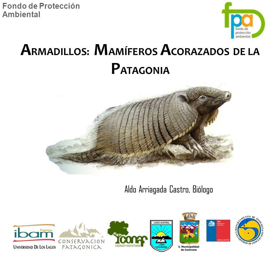 Fondo de Protección Ambiental Aldo Arriagada Castro, Biólogo A RMADILLOS: M AMÍFEROS A CORAZADOS DE LA P ATAGONIA