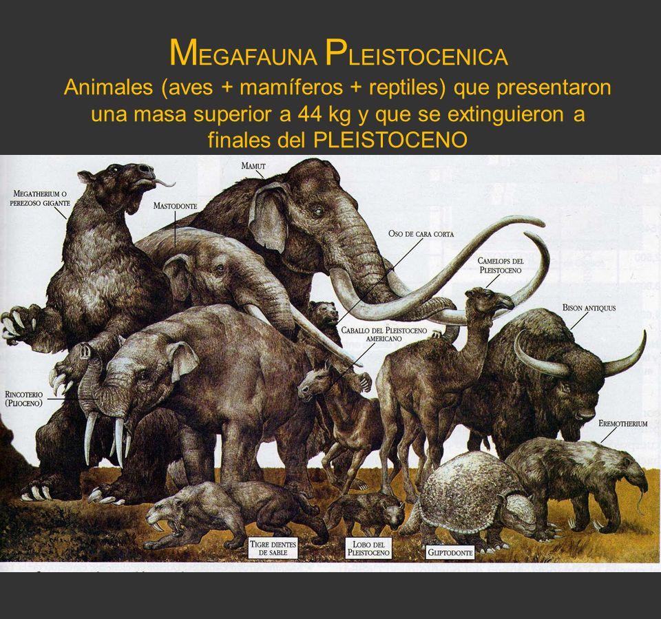 M EGAFAUNA P LEISTOCENICA Animales (aves + mamíferos + reptiles) que presentaron una masa superior a 44 kg y que se extinguieron a finales del PLEISTO