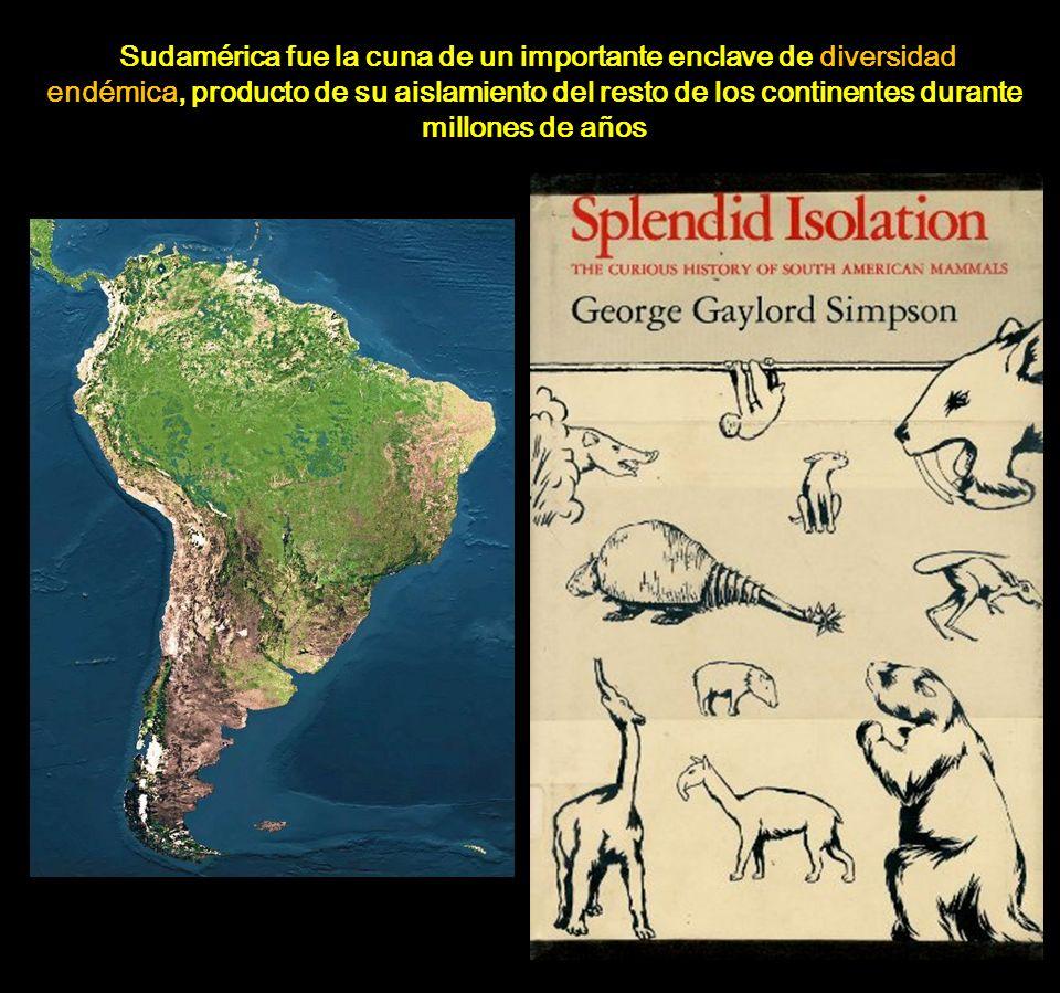 Sudamérica fue la cuna de un importante enclave de diversidad endémica, producto de su aislamiento del resto de los continentes durante millones de añ