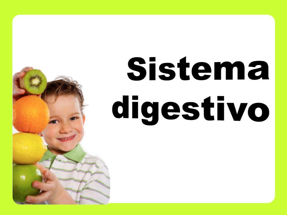 -Describir la anatomía y fisiología del sistema digestivo.