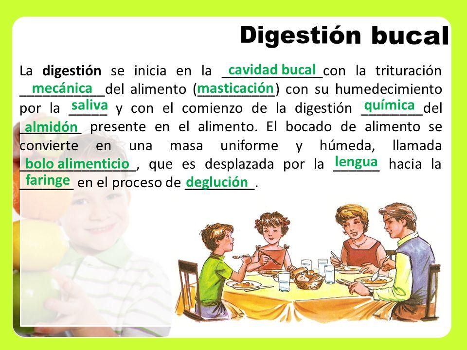 La digestión se inicia en la _____________con la trituración ___________del alimento (__________) con su humedecimiento por la _____ y con el comienzo