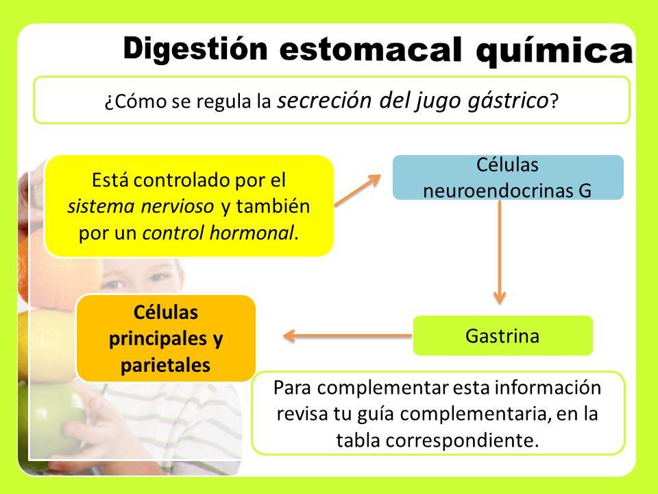 ¿Cómo se regula la secreción del jugo gástrico ? Está controlado por el sistema nervioso y también por un control hormonal. Células neuroendocrinas G