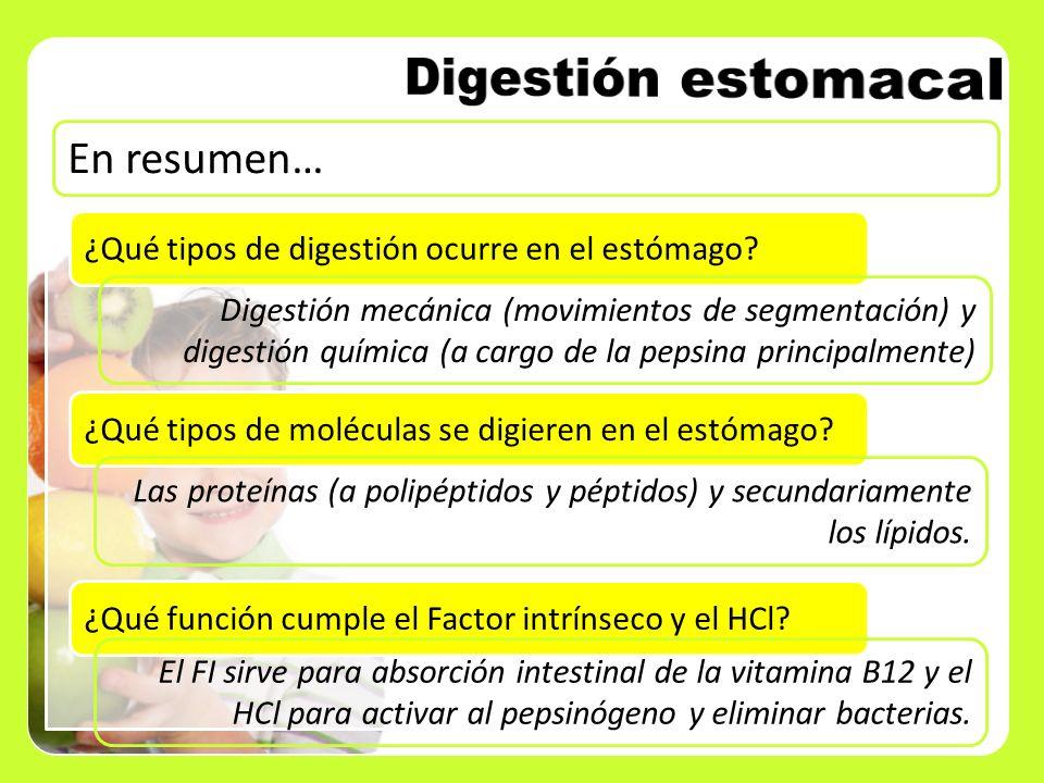 En resumen… ¿Qué tipos de digestión ocurre en el estómago? Digestión mecánica (movimientos de segmentación) y digestión química (a cargo de la pepsina