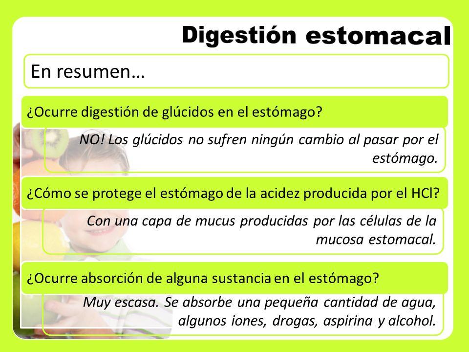 En resumen… ¿Ocurre digestión de glúcidos en el estómago? NO! Los glúcidos no sufren ningún cambio al pasar por el estómago. ¿Cómo se protege el estóm