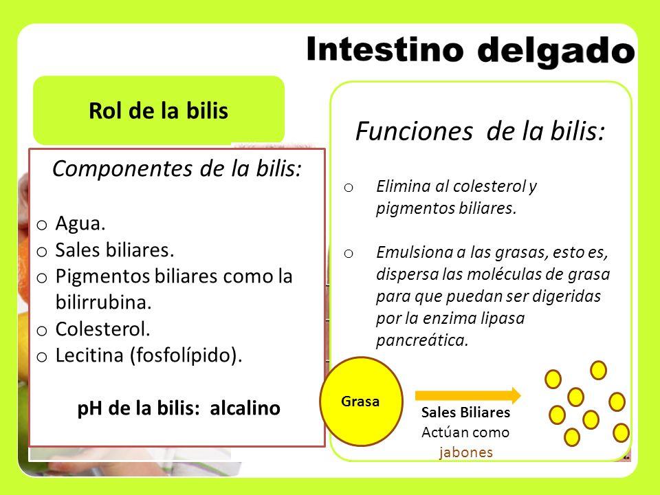 Rol de la bilis Componentes de la bilis: o Agua. o Sales biliares. o Pigmentos biliares como la bilirrubina. o Colesterol. o Lecitina (fosfolípido). p
