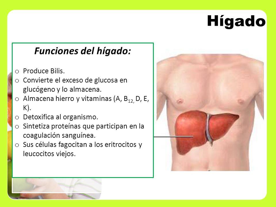 Funciones del hígado: o Produce Bilis. o Convierte el exceso de glucosa en glucógeno y lo almacena. o Almacena hierro y vitaminas (A, B 12, D, E, K).