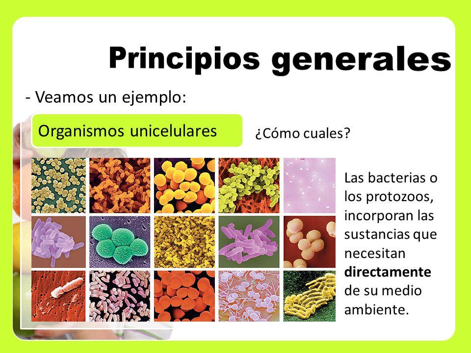 - Veamos un ejemplo: Organismos unicelulares ¿Cómo cuales? Las bacterias o los protozoos, incorporan las sustancias que necesitan directamente de su m