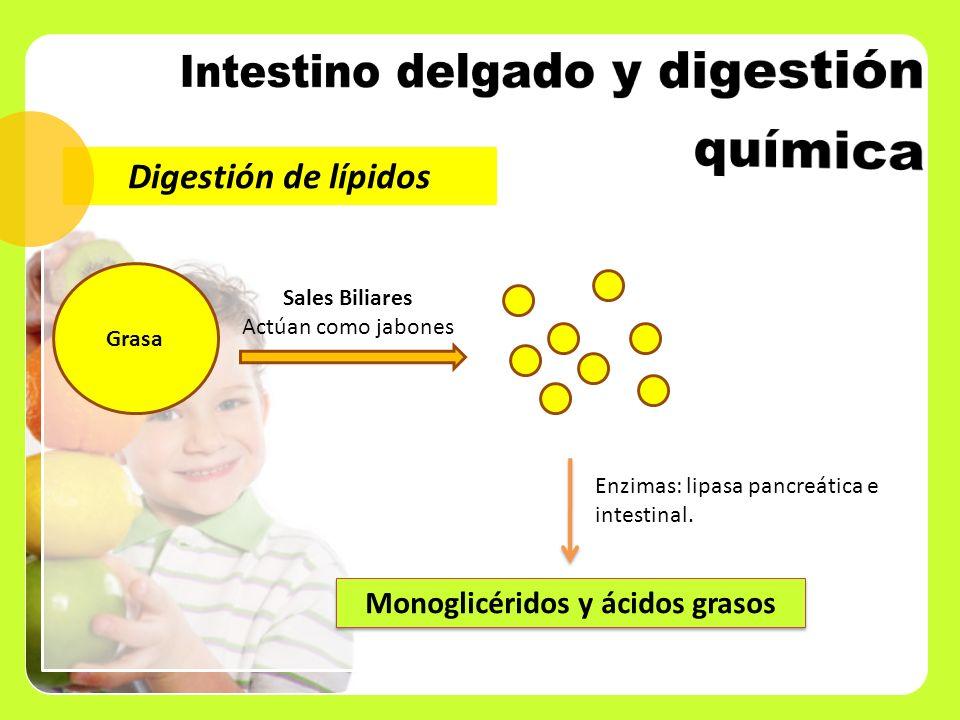 Digestión de lípidos Grasa Sales Biliares Actúan como jabones Monoglicéridos y ácidos grasos Enzimas: lipasa pancreática e intestinal.