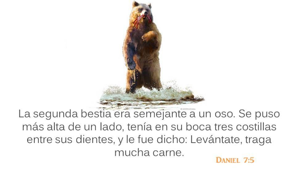 Daniel 7:5 La segunda bestia era semejante a un oso. Se puso más alta de un lado, tenía en su boca tres costillas entre sus dientes, y le fue dicho: L