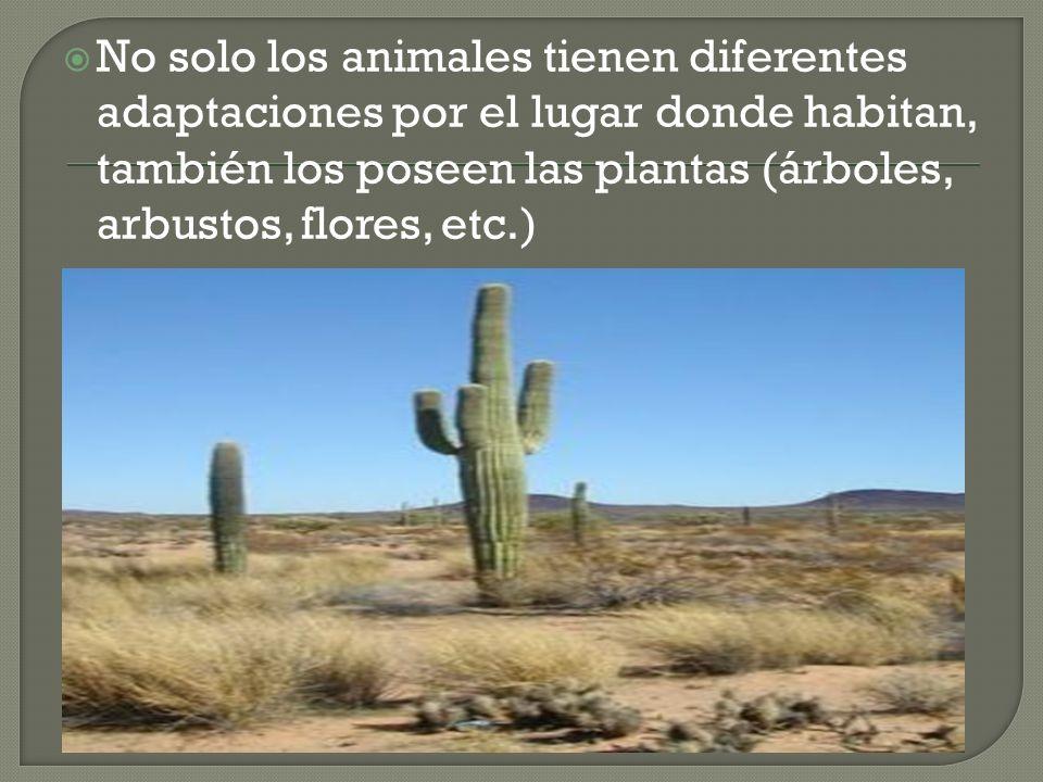 No solo los animales tienen diferentes adaptaciones por el lugar donde habitan, también los poseen las plantas (árboles, arbustos, flores, etc.)