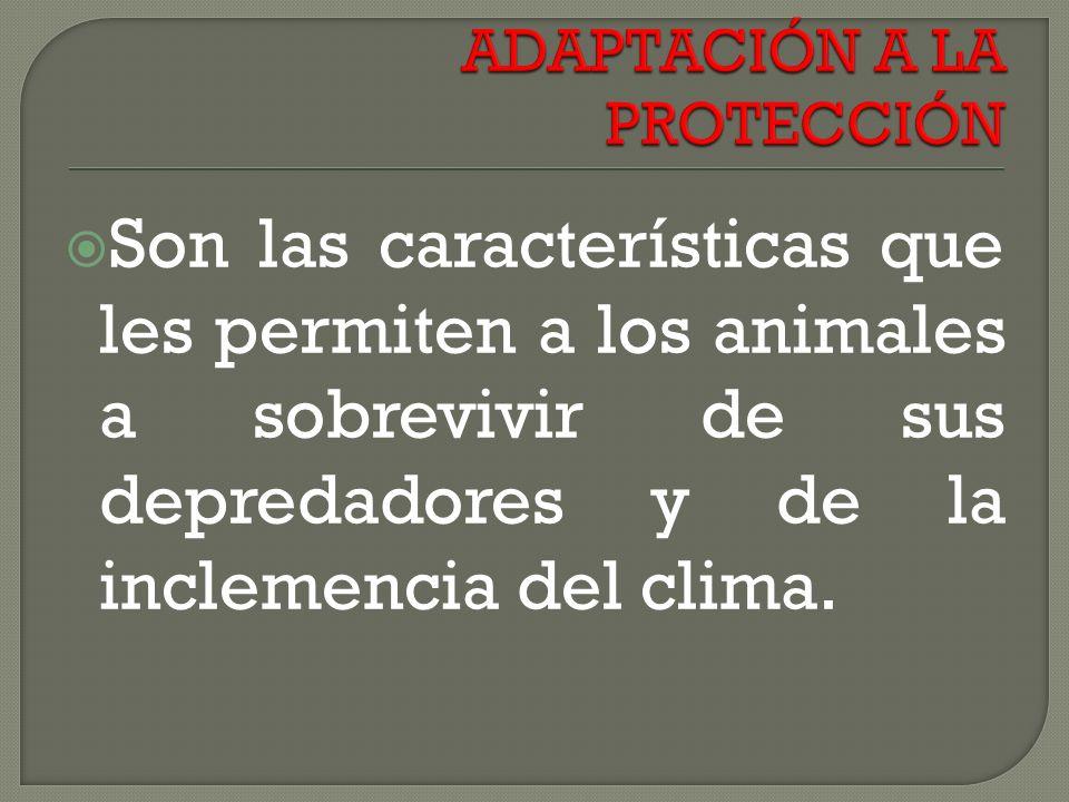 Son las características que les permiten a los animales a sobrevivir de sus depredadores y de la inclemencia del clima.