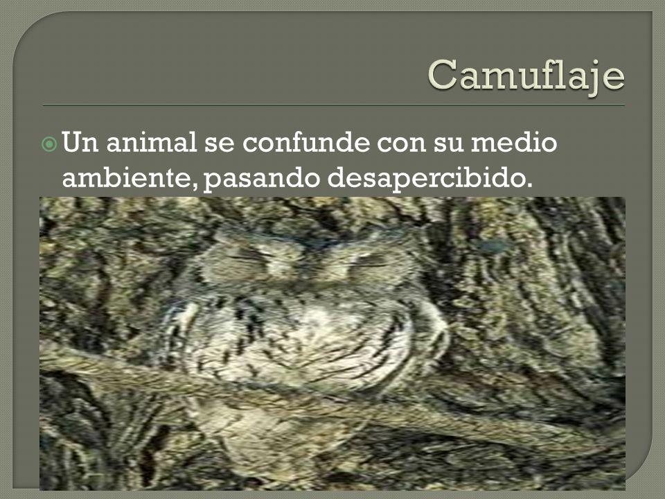 Un animal se confunde con su medio ambiente, pasando desapercibido.