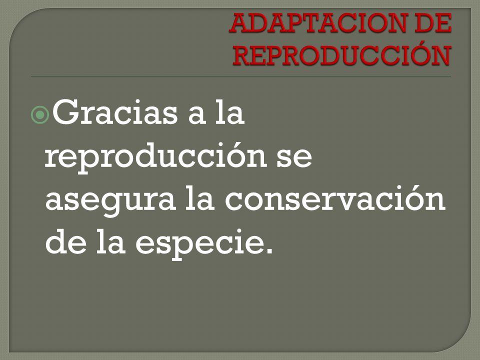Gracias a la reproducción se asegura la conservación de la especie.